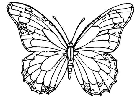 Coloring Images Of Butterflies by The Butterfly Coloring Pages Butterflies Coloring