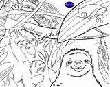 Coloring Sloth Copy Slothful Reviewed Viewed Billionaire sketch template