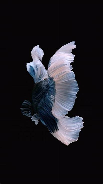 Iphone Fish Ios Wallpapers Apple