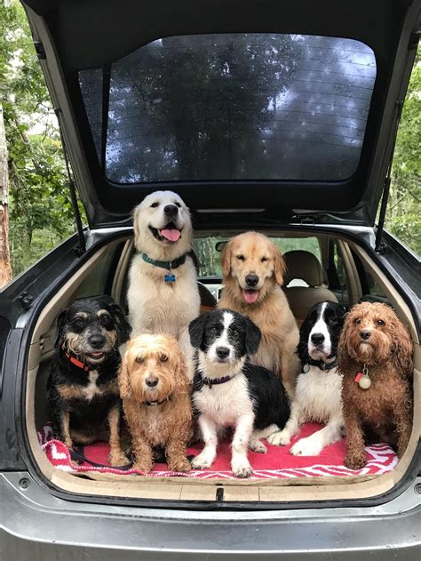 walker photographer dog comments