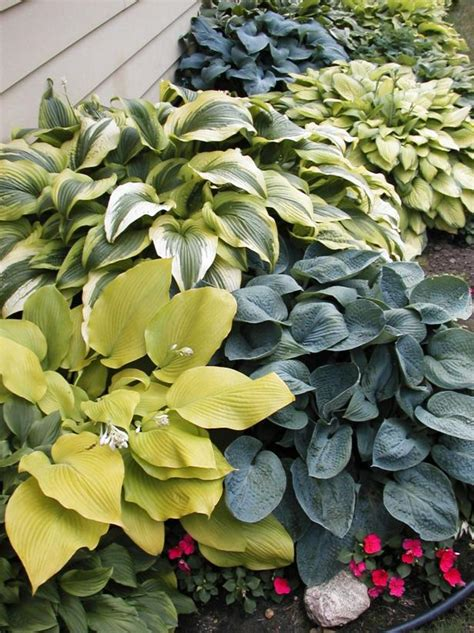 types  hostas diy