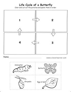 cycle worksheets for preschools 912 | life cycle of a butterfly activity worksheet