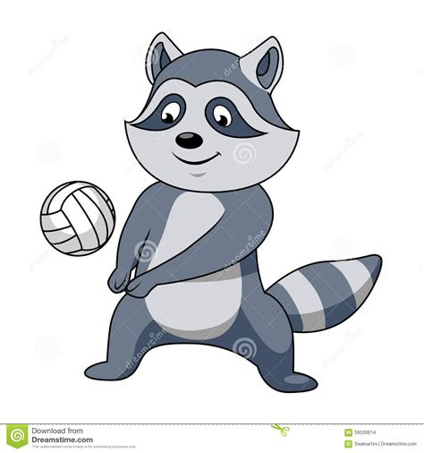 cartoon raccoon  volleyball ball stock vector image