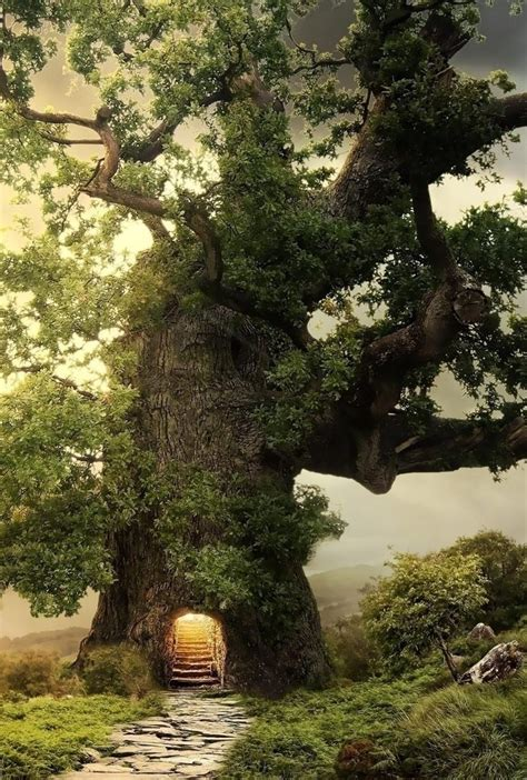 forest tree fantasy forest wallpaper  desktop