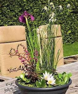 Miniteich Pflanzen Set : mini teich f r terrasse und balkon haus garten pinterest ~ Buech-reservation.com Haus und Dekorationen