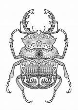 Coloring Pages Zentangle Beetle Adult Beetles Mandala Adults Escarabajo Google Drawing Coloriage Patterns Printable Con Doodle Bug Sheets Animal Insect sketch template