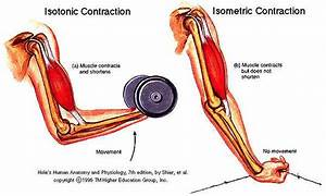 Muscle Contractions  U2013 Body Knowledge