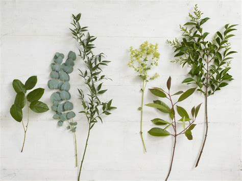 Learn About Types Of Foliage For Flower Arranging From