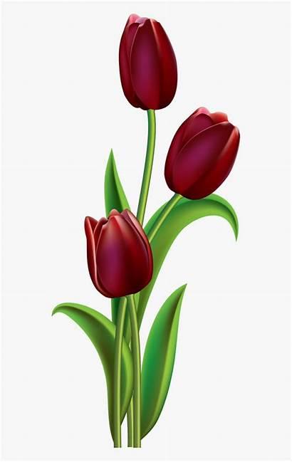 Tulip Clipart Painting Flower Flowers Lviolette Easy