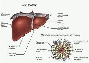 Восстановление печени после пвт гепатит с