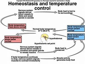 17 Best Images About Homeostasis On Pinterest