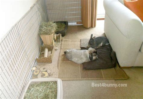 cat house indoor rabbit accommodation housing ideas for bunny rabbits