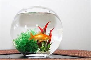 Fish Bowl Aquarium - 1000+ Aquarium Ideas