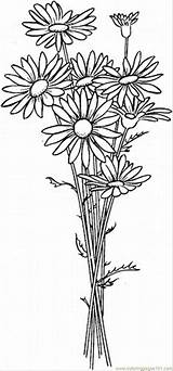 Daisy Coloring Flowers Printable Coloringpages101 Pdf sketch template
