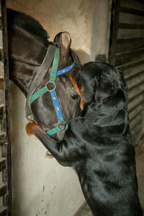 reasons rottweilers    friendly dogs