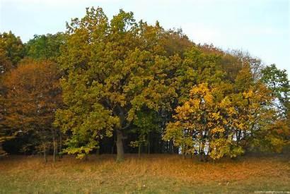 Trees Autumn Oak Freebigpictures Season Previous Reply