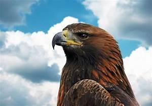 Restaurantes Toks a favor del águila real ExpokNews