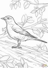 Coloring Robin Pages American Printable Bird State Drawing Dot Wisconsin sketch template