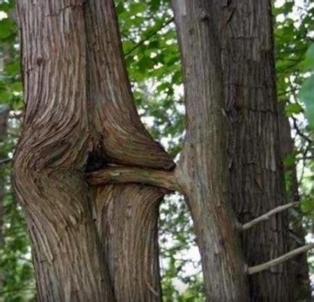 8 Fakta Lucu Tentang Wanita Hamil Post Pengaruh Obat Pria Ini Quot Gituan Quot Dengan Pohon Az
