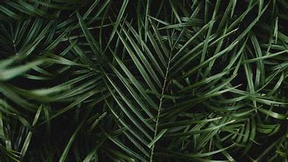 4k Palm Leaves Dark Branches Plant Background