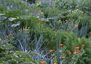 Mischkultur Im Garten : biologisch g rtnern f r die schmetterlinge bl hendes sterreich ~ Orissabook.com Haus und Dekorationen