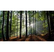 2560x1440 Forest Bright Sunbeam FHD Wallpapers