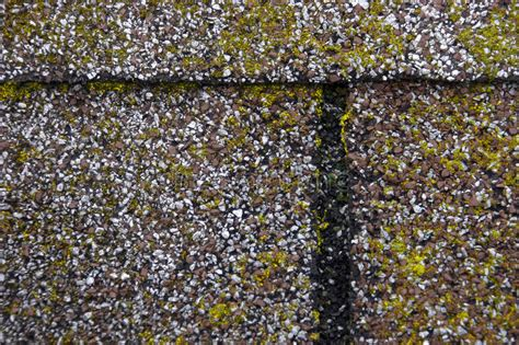 Mold/moss Damage On House Roof Shingles Stock Photo When Did Fiddler On The Roof Come Out How To Install A Shingle Find Roofing Companies Venting Dryer Through Pitched Skylight Industrial Services Leak Detection Red Inn Albuquerque Nm