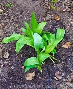 Garten Was Tun Im März : aus meinem garten m rz ~ Markanthonyermac.com Haus und Dekorationen