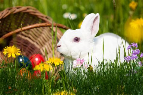 Animated Easter Bunny Wallpaper - easter bunny animated wallpaper desktopanimated