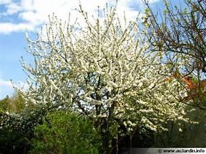 Taille De Cerisier : tailler le cerisier ~ Melissatoandfro.com Idées de Décoration