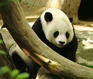 World Animal: Endangered Animals