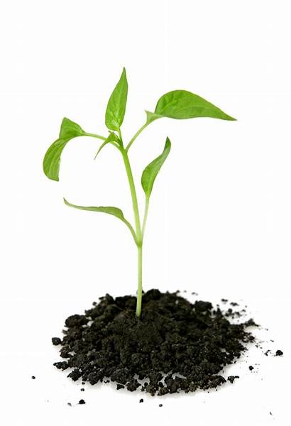 Plant Growing Clipart Hq Leaf Freepngimg
