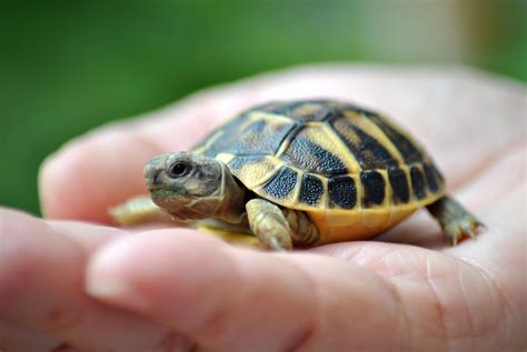 Best Heat Ls For Turtles by Names For Pet Turtles And Tortoises