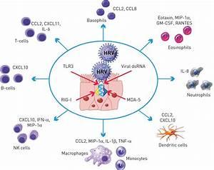 Virus Cell Common Cold Virus Diagram