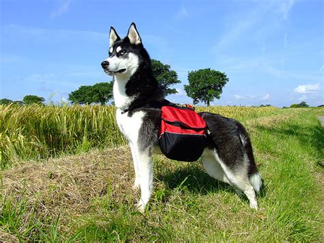 tips  hiking  camping  dogs petswelcomecom