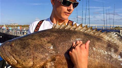 rawwfishing money much grouper catch cook goliath worth naibuzz