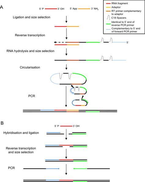 Rna Seq Illumina Schematic Of Rna Seq Library Generation Protocols Rna