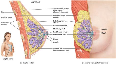 Breast Cancer Causes Signs Symptoms Types Treatment