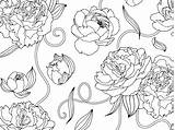 Peonies Coloring Pages Dribbble Pattern Floral sketch template