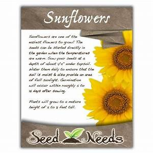 sunflower seeds sunflower seed packets wedding favors With sunflower seed packets wedding favors