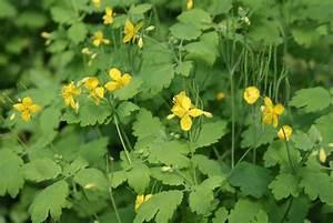 Pflanzen Für Teichumrandung : giftpflanzen im garten ~ Michelbontemps.com Haus und Dekorationen