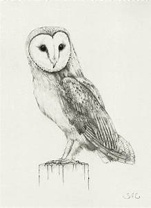 Barn Owl Clipart Pencil Drawing