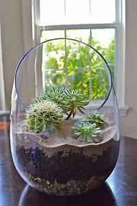 Terrarium Plante Deco : succulent terrarium succulentes plantes grasses ~ Dode.kayakingforconservation.com Idées de Décoration