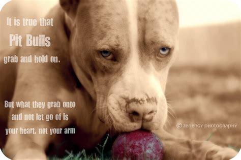 short pitbull dog quotes