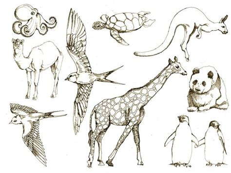 images    draw animals  pinterest