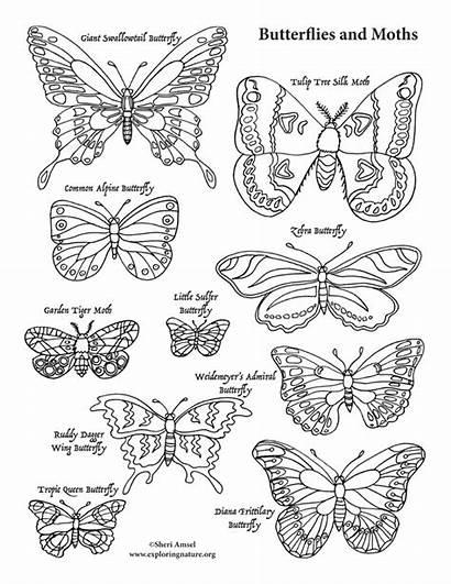 Coloring Butterflies Moths Nature Exploringnature