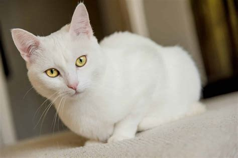 white cat names    dog people