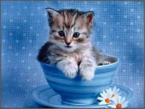 cat for free free impossibly kitten cats wallpaper computer