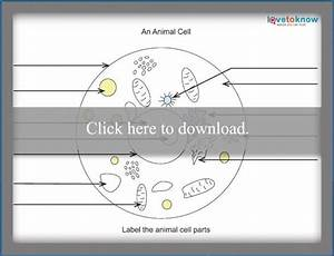 Made By Teachers  Animal Cell Diagram Fill In The Blank