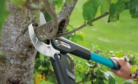 apfelbaum schneiden zeitpunkt apfelbaum schneiden garten obstbaumschnitt apfelb 228 ume